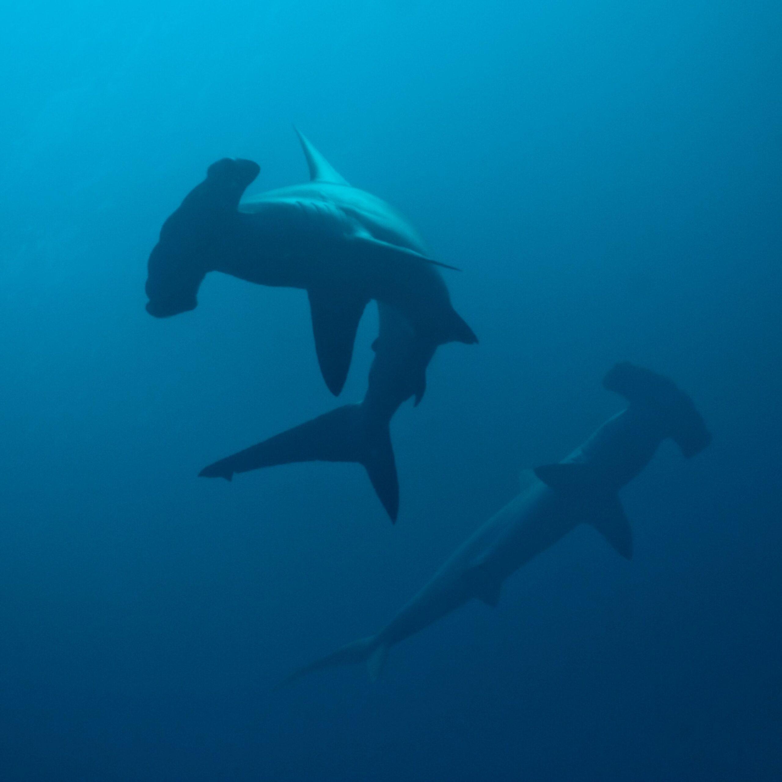 Banner Day for Shark Conservation!