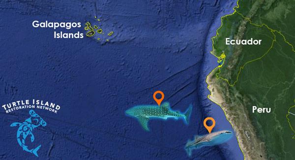 whale-shark-map