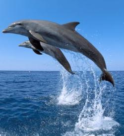 US To Implement Dolphin-Safe Rules For Seafood Imports