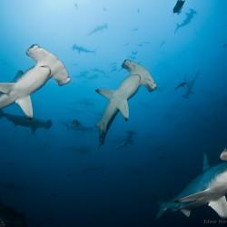 Photo by Edwar Herreno, Undersea Hunter.