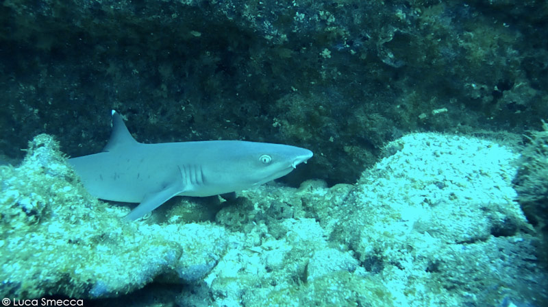 Night Time is the Right Time to See Whitetip Reef Sharks (Day 5)