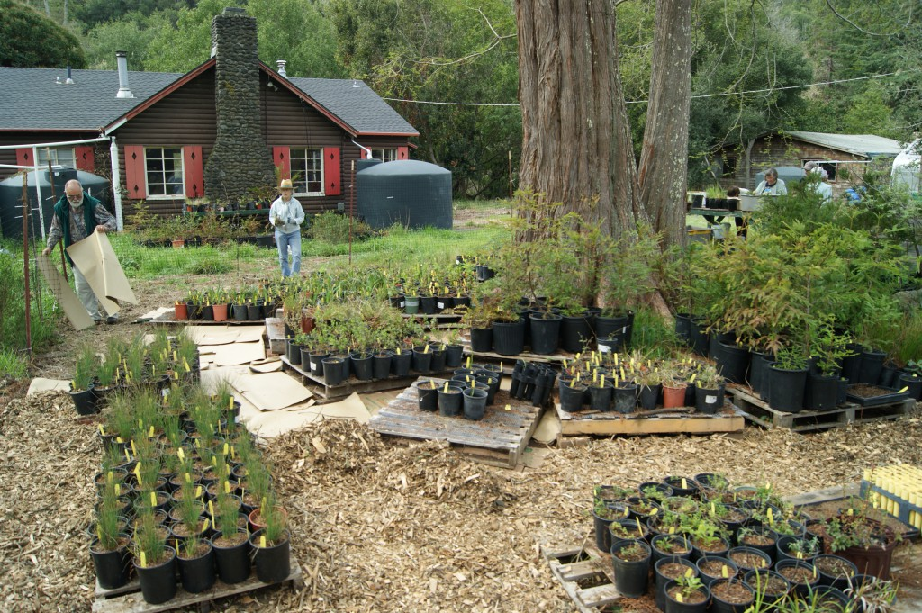 Volunteers and staff working at our native plant nursery