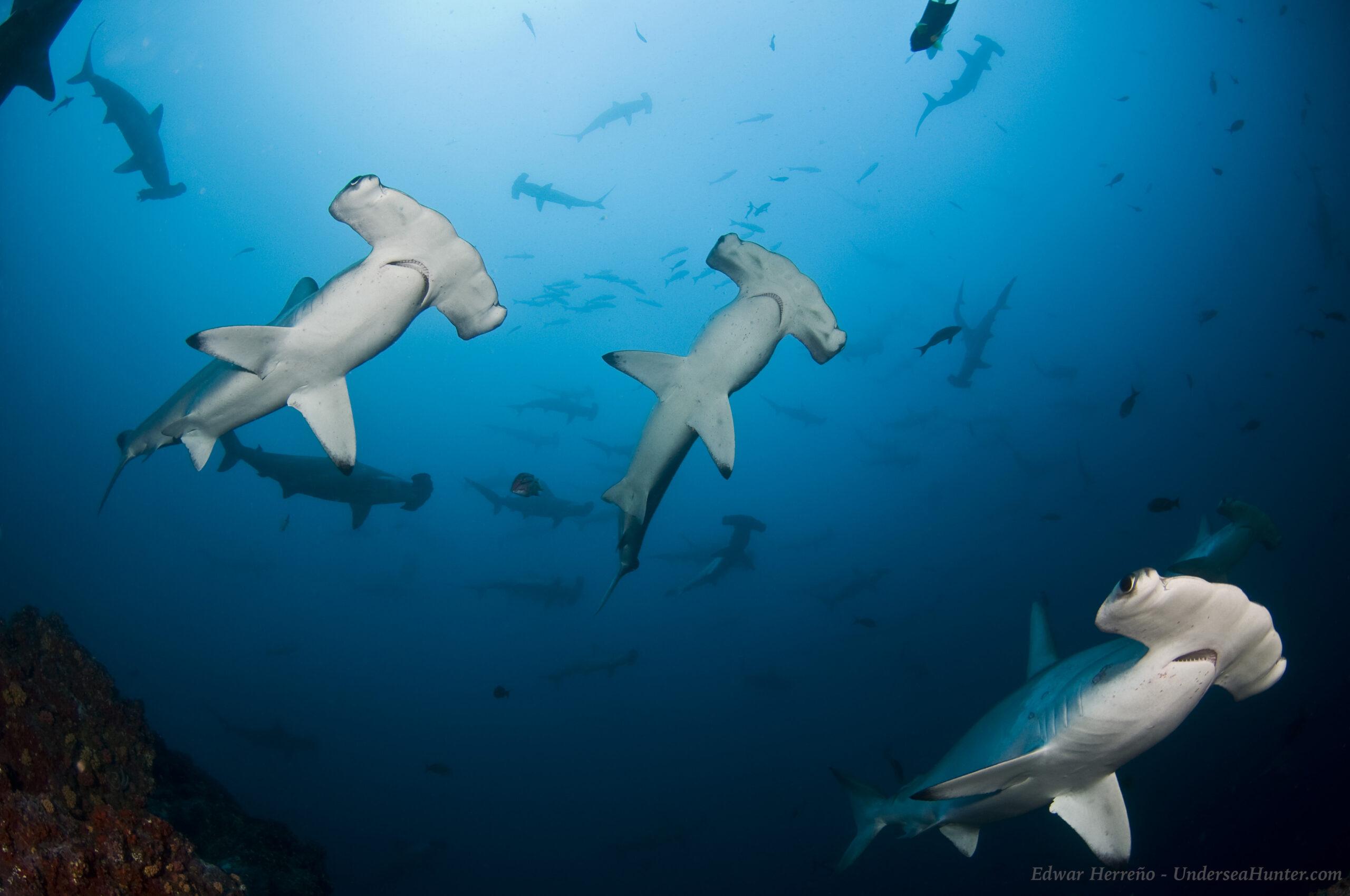 American Airlines Will No Longer Ship Shark Fins