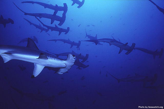 Costa Rica shark finners fly fins to U.S. en route to Hong Kong, documents reveal