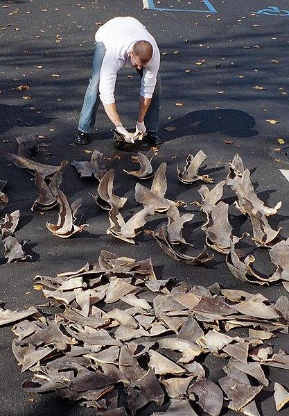 Make Shark Week About Saving Sharks