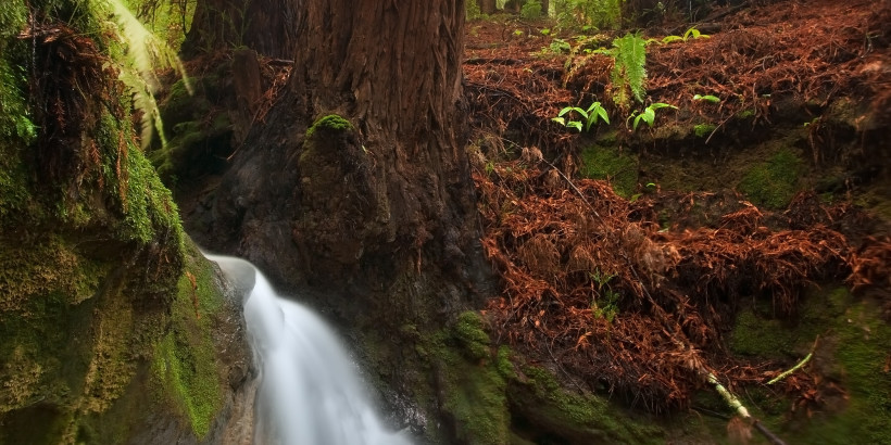 redwood-river