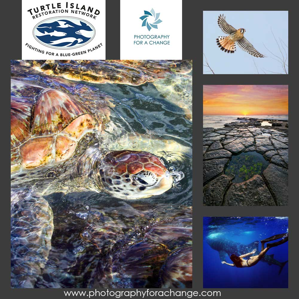 Photography for a Change Show to Benefit Turtle Island Restoration Network