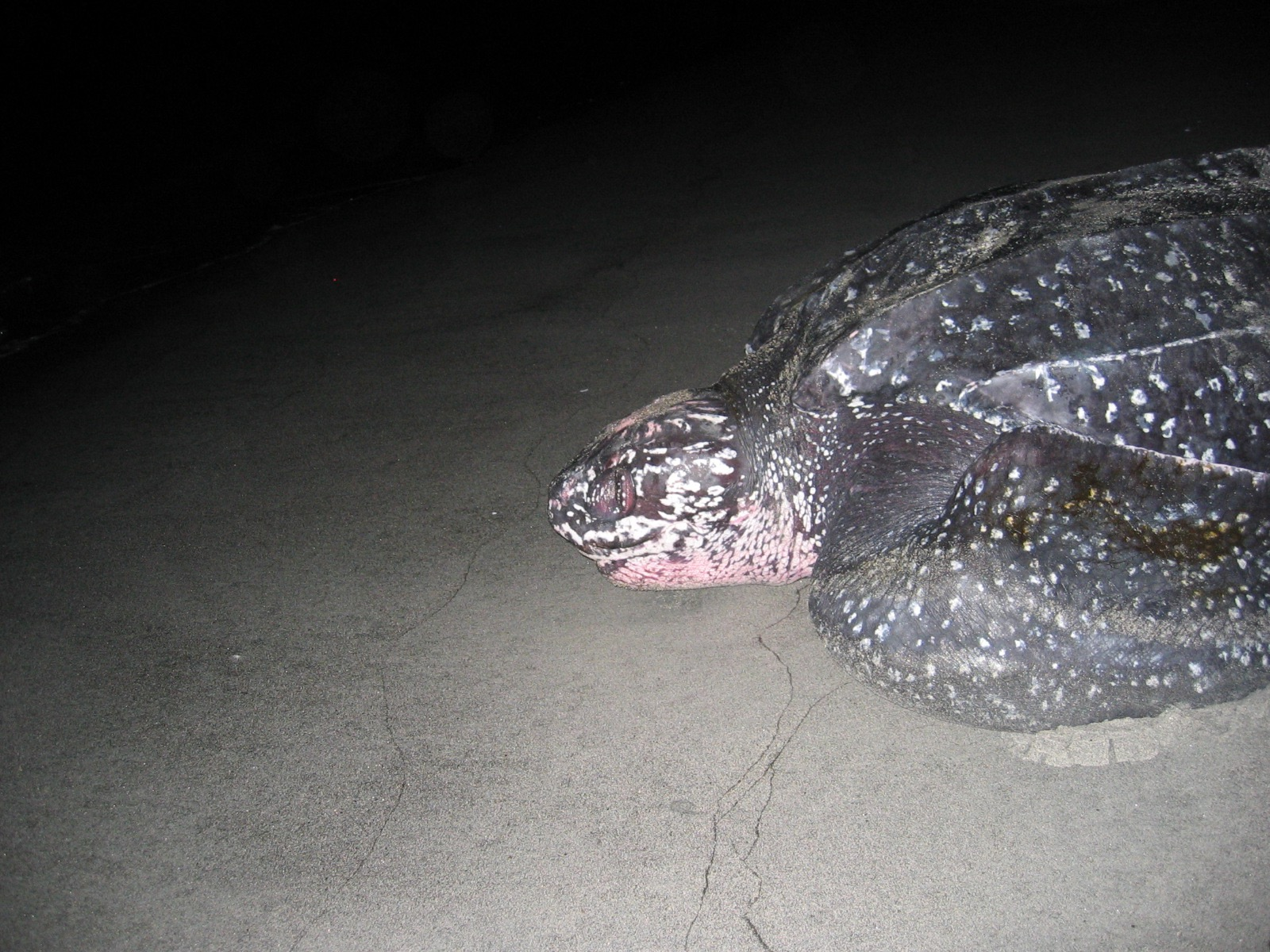 Falling in Love with Sea Turtles