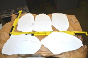 Customs and Border Patrol image of seized Hawksbill scutes