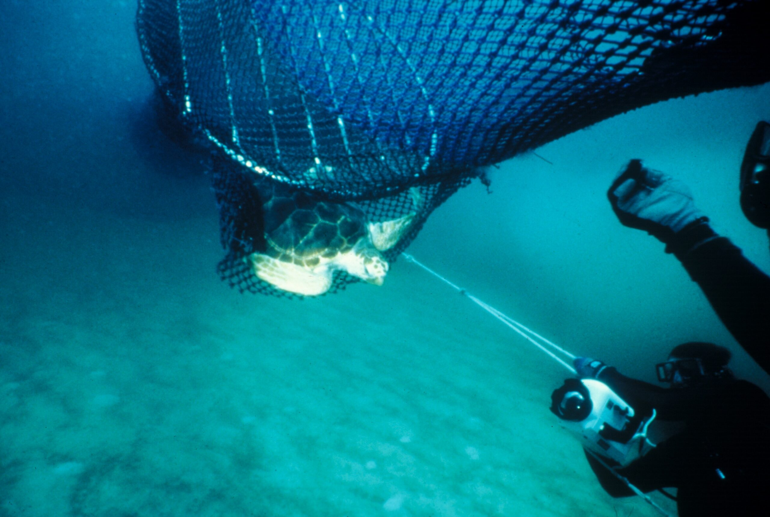 Turtle Excluder Devices Missing on Skimmer Trawls in the Gulf of Mexico