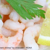 Shelled_northern_shrimp