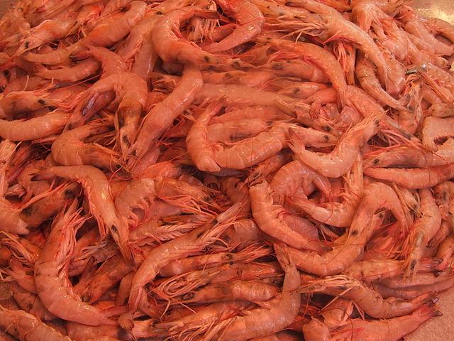 Slave Shrimp Victory!