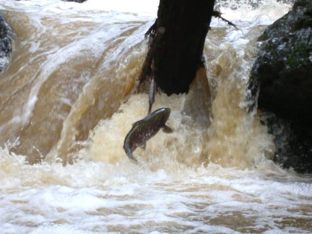 Final Spawning Coho Salmon Population Count