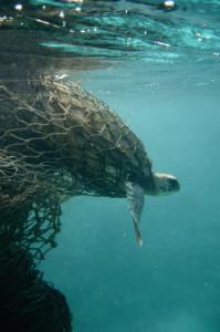 turtleghostnetfish1933