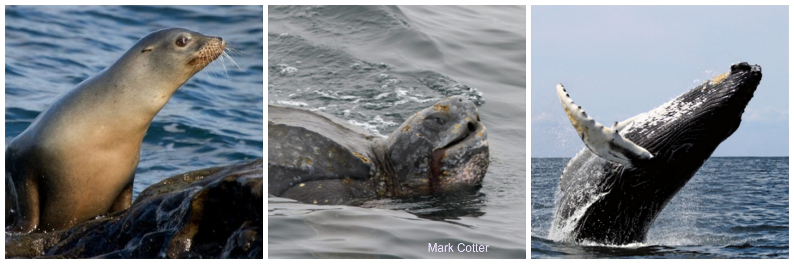 Senate Bill 1114 to Phase out the California Driftnet Fishery and Protect Marine Wildlife Moves Through Senate Committee on Natural Resources and Water
