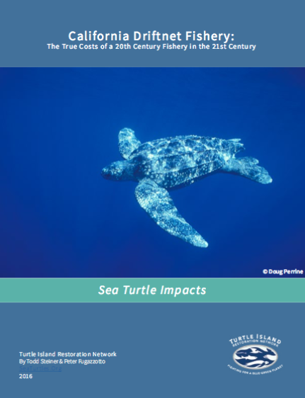 California's Driftnet Fishery Could Wipe Out Endangered Pacific Leatherback Sea Turtles
