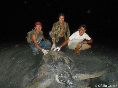 Protect Nicaragua's Leatherback Sea Turtles!