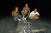 Leatherback Nesting Nicaragua