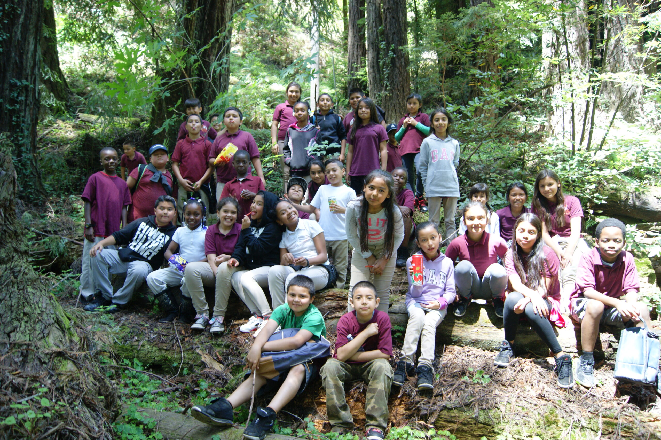 Science in the Redwoods