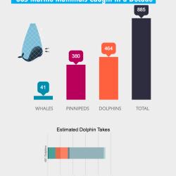 impact-of-driftnets-on-marine-mammals
