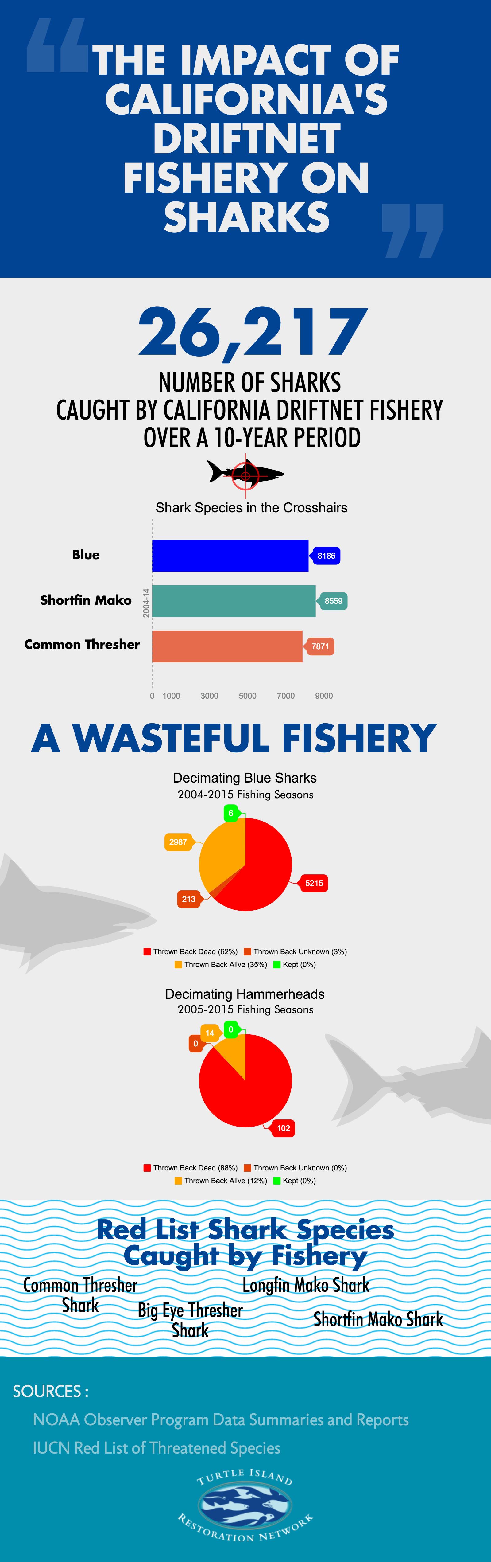 impact-of-driftnets-on-sharks