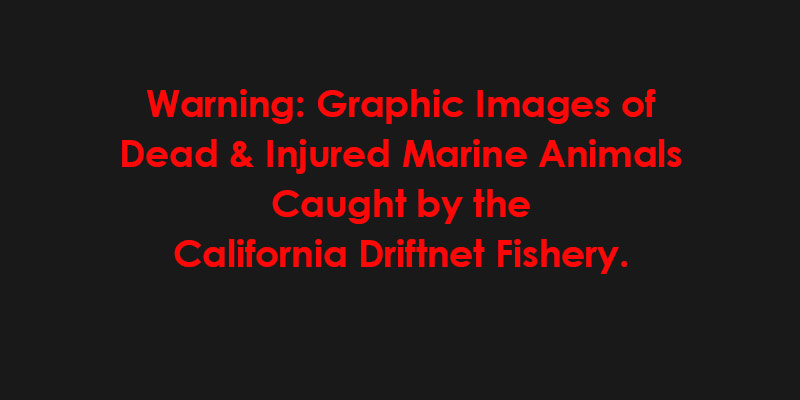 Just Released Graphic Photos Expose Carnage of Deadly California Driftnet Fishery