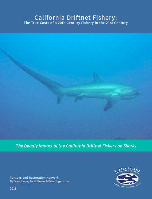 California's Driftnet Fishery Puts Sharks in Crosshairs