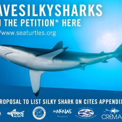 SilkySharkPetition_EN_072516