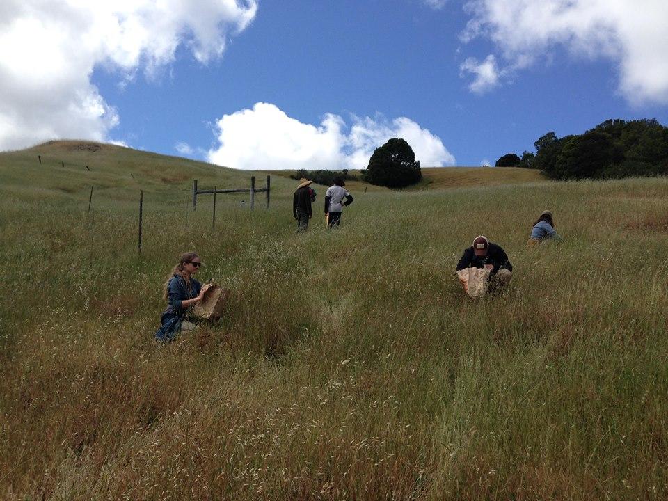 Collecting Native Plant Seeds for Habitat Restoration