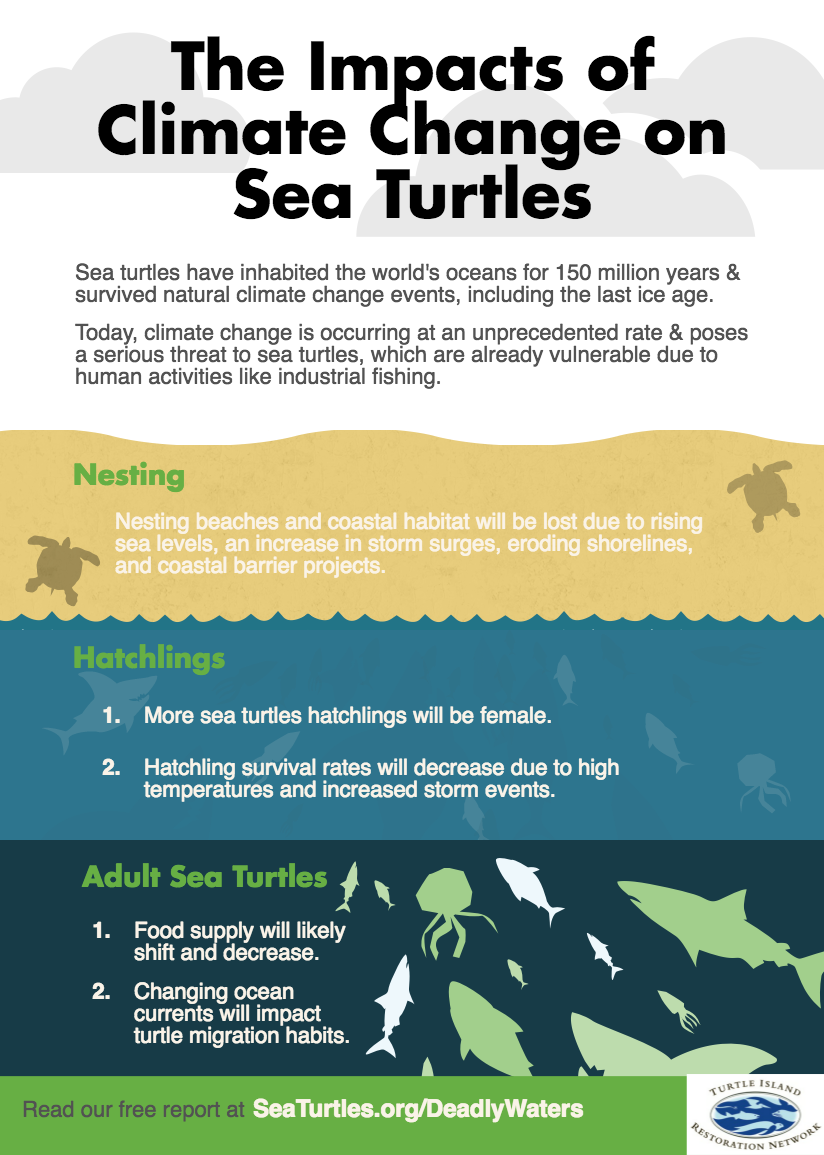 INFOGRAPHIC: The Impacts of Climate Change on Sea Turtles