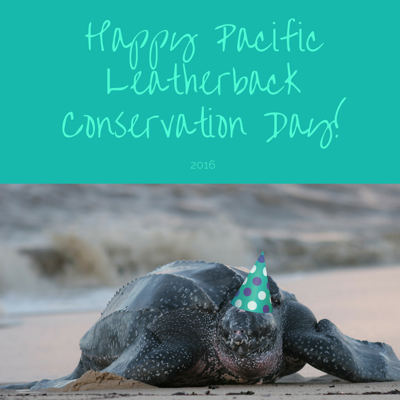 Turtle Island Calls for Action to Protect Pacific Leatherback Sea Turtles from the California Driftnet Fishery for Swordfish