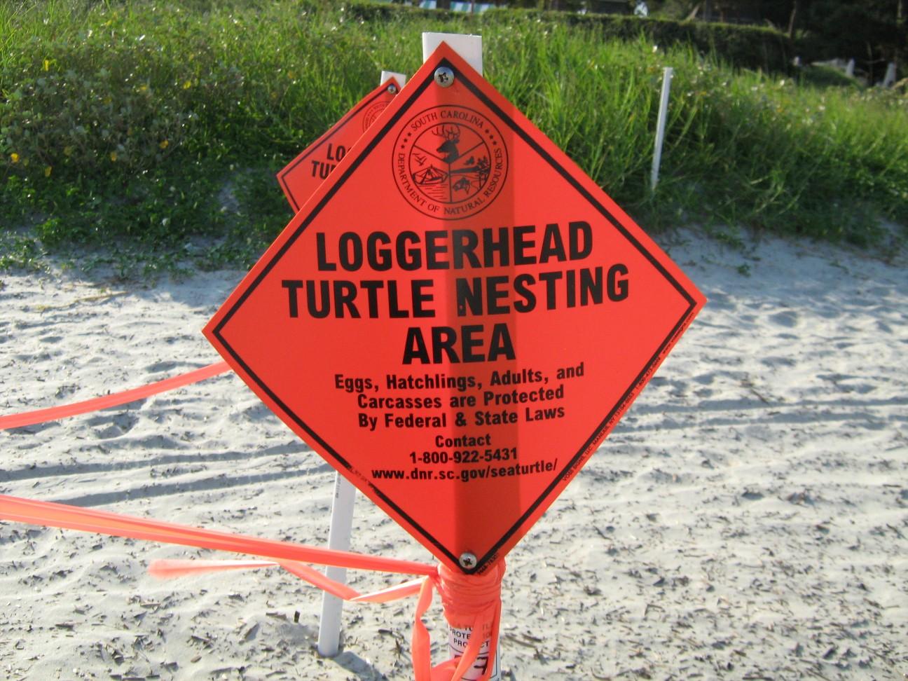 loggerhead_nesting_area