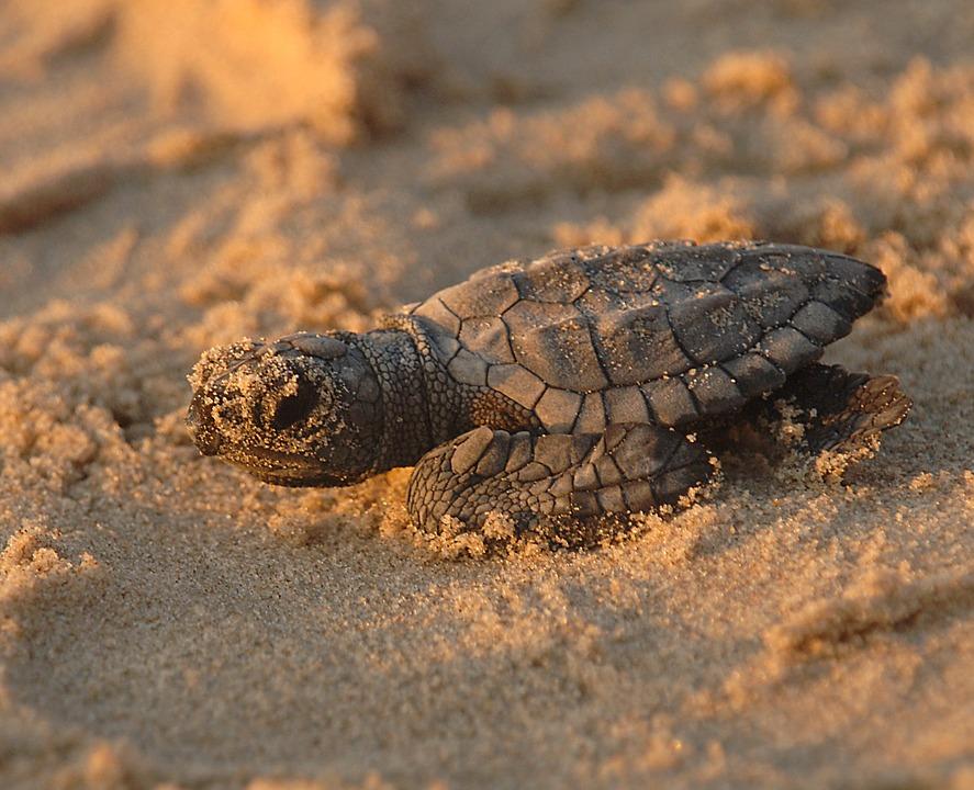 turtle-701663_960_720