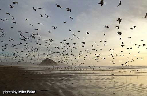 For the Birds: Turtle Island Helps Protect Migratory Birds
