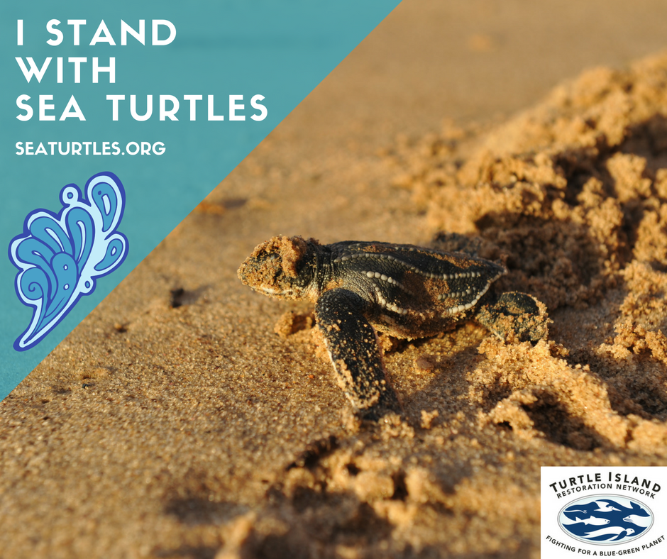Share that YOU Stand with Sea Turtles!