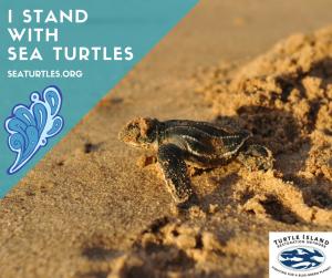 i-standwithsea-turtles