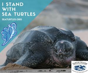 i-standwithsea-turtles1