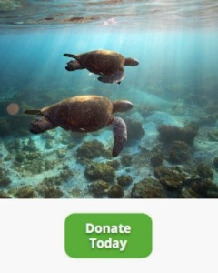 two-sea-turtles-donate