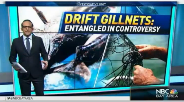 SHARE the Truth about the Deadly Impact of California Driftnets for Swordfish