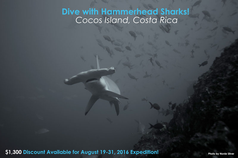 Scuba Dive with Hammerhead Sharks at Cocos Island, Costa Rica