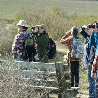 Birding at Abbotts Lagoon