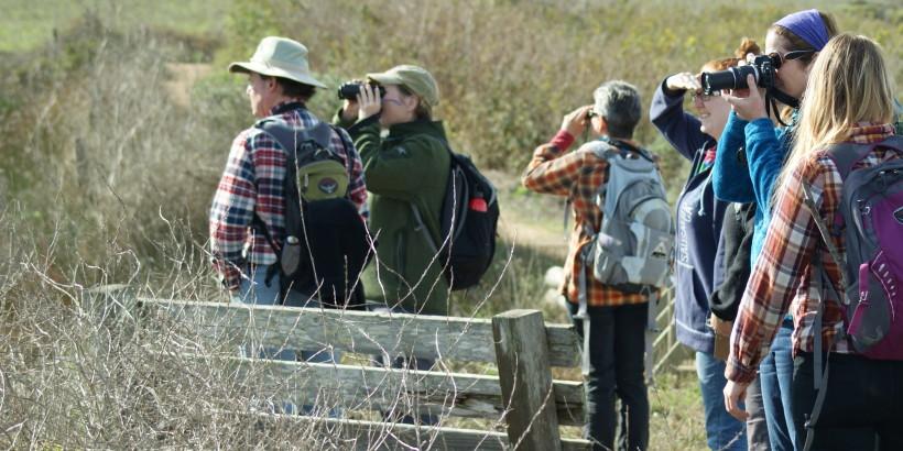 Birding at Abbotts Lagoon
