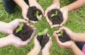Hands-sapling-soil_web