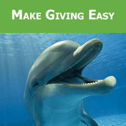 Make Giving Easy with a Monthly Donation