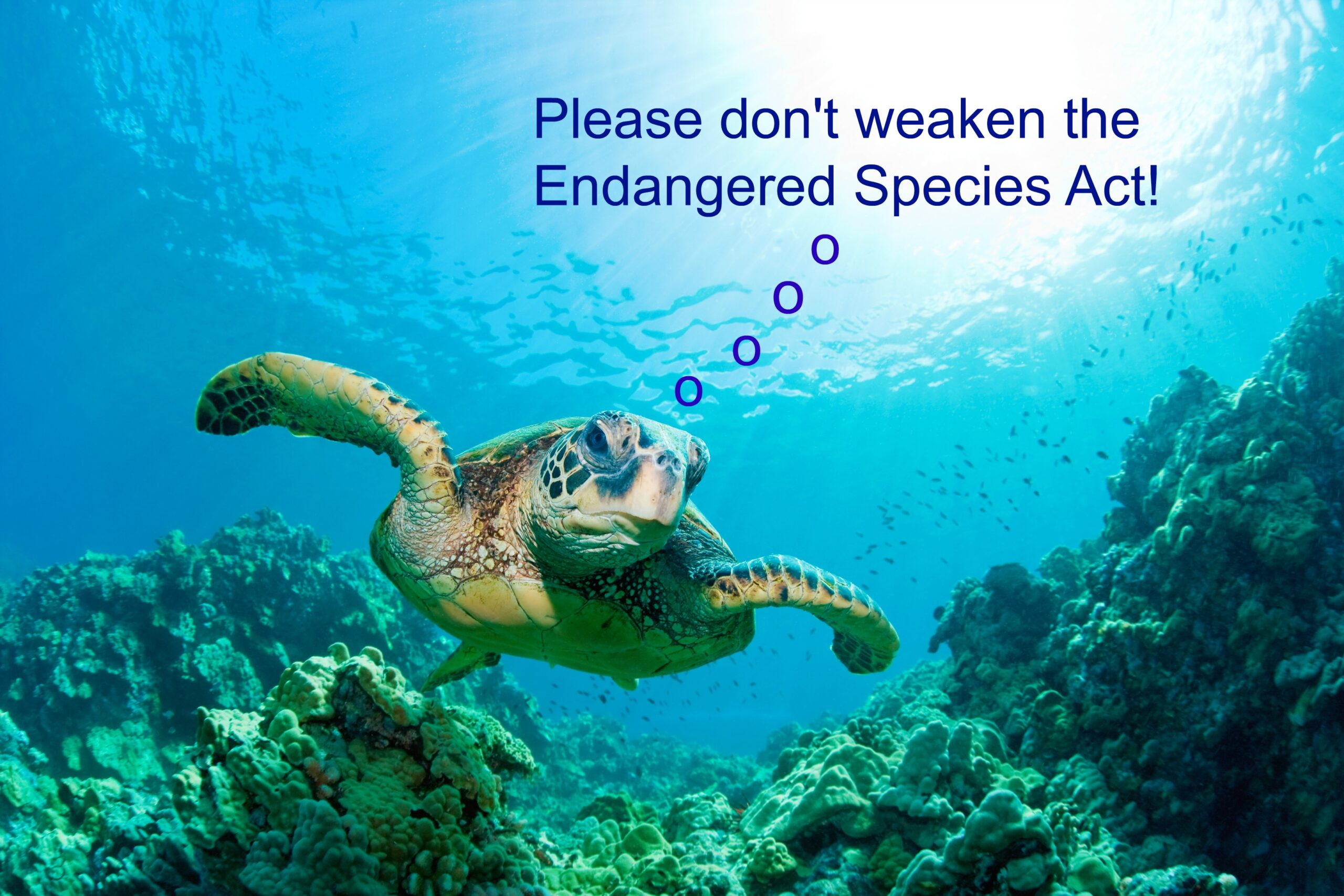 Governors Group Works to Undermine Endangered Species Act