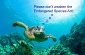 sea turtle - ESA