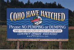 Coho Have Hatched web2