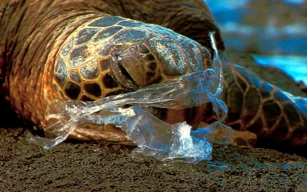 Your Calls Mattered – Global Response Resonates in Texas on Plastic Bags