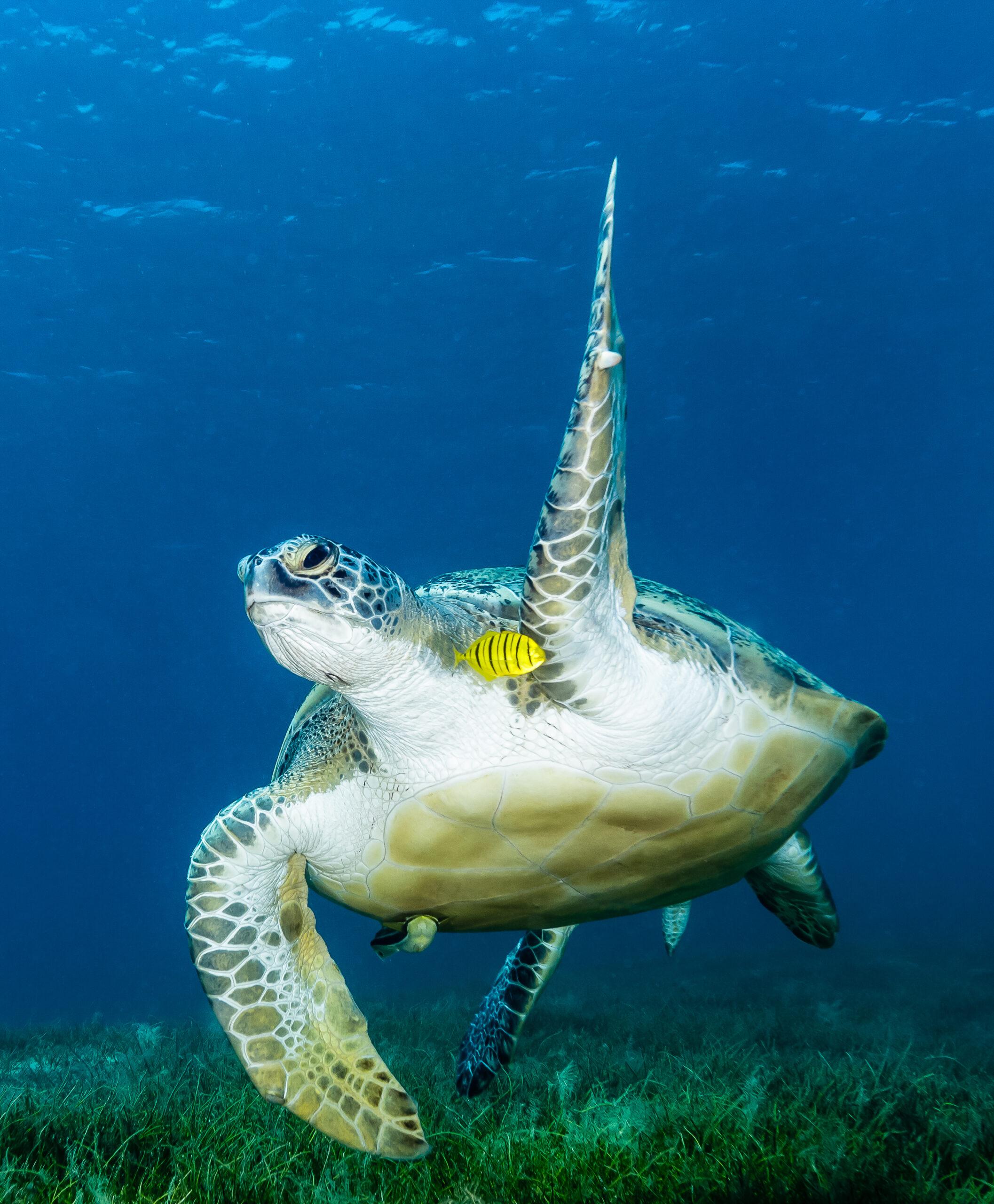 Celebrate World Turtle Day