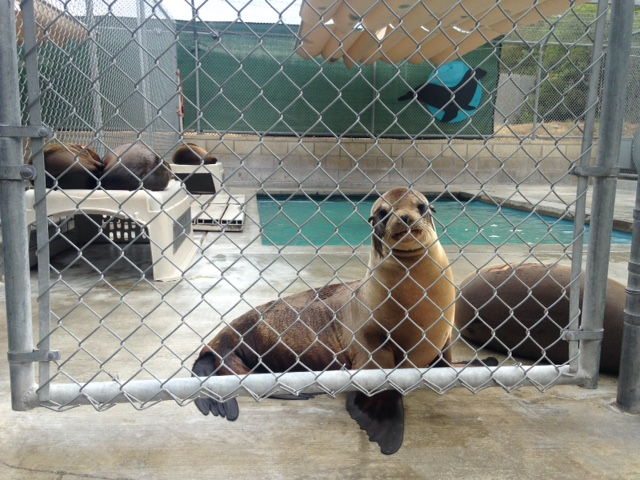 Turtle Island Working With Pacific Marine Mammal Center to Fight Drift Gillnets